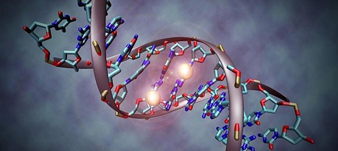 genetisch bepaald
