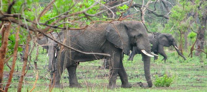 Malawi reizen natuur