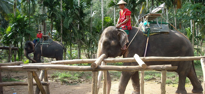 olifantenritjes Cambodja